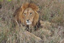 SouthAfrica / Safari and more