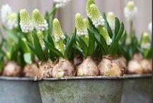 Frühling kommt!!! / Wenns grünt ...
