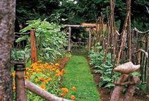 Jardín, frutas y verduras.