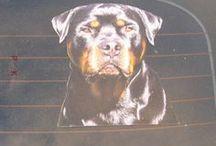 Autoaufkleber Tiere Hunde / Hundeaufkleber, Fotoaufkleber, Autoaufkleber mit Foto