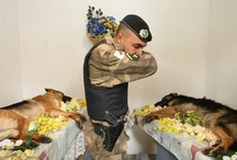 Farewell from the friends / K-9 memorial page http://petmemorialcards.com/mem2001-4.html