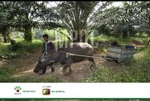 People & Machine Images / The people and the machinery of the palm oil industry.  http://palmoiltv.org/