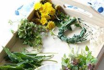 Weed of the Week / Edible weeds. Wild edibles.