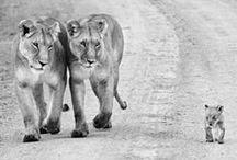 Animals - best subject in photos