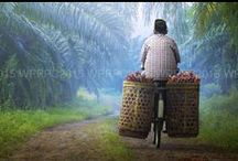 Photography World Palm Portraits 2015 / MPOC's third photography competition. It first started in 2013.