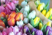 Flowers - enjoy the colours