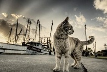 Animals (HDR) / Stunning HDR photos of Animals. Check more at our website - http://hdr-photography.net/category/animals/