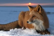 ✿ Animals are so beautiful ! ✿