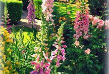 ✿ Flowers and gardens ✿ / #flowers #garden #fleurs #jardins #nature