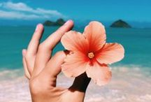✿ Summer Time ✿ / #summer #été #sun