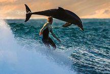 ✿ Surf ✿