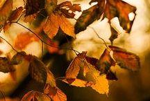 Jesień/Autumn