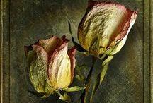 Róże/Roses