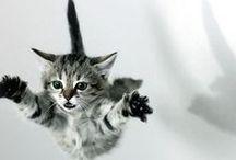 Chaaaaaaaaats / Les chats, parce que c'est mignon et que ça ronronne.