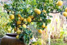 gardening / Potted plants, indoor plants, small gardens, herbs and veggies