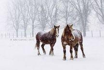 Horse, horse, horse