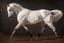 Equine Art / by Elizabeth Patton
