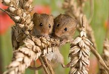Mice and gerbils