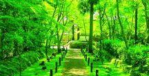 Summer Green Japan / 竹林や柳、苔、新緑です。苔、綺麗なんですけど滑るんですよねーw 足下にはご注意有れ。