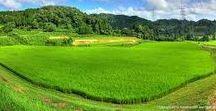 The Countryside 里山 / 里山の風景です。まぁ、俗に言うトコの田舎の風景って奴ですね。のんびりと自給自足で田舎で暮らす。最高の暮らしだなって思うけど、きっと「隣の芝生」なんでしょうね。