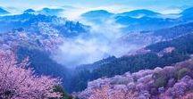 """本州 """"Yoshino/Asuka"""" / 橿原を拠点とした場合、吉野山と長谷寺が別方向に離れてますのでピンポイントで狙って行くのが良いかと思われます。千本桜は、エリアが広大過ぎますので下調べしてから行った方が良いですよ。ちなみにエリア的には、下千本、中千本、上千本、奥千本の4つのエリアに分かれていて基本、車移動になります。"""