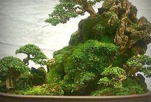 Bonsai 盆栽 / 盆栽です。