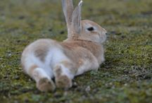 """本州 """"Ookuno-Jima"""" / 旧軍事施設跡、毒ガス製造工場跡などが残る廃墟の島は、野生のウサギが増殖し、風光明媚な「ウサギの島」となりました。廃墟マニア、兎好きも納得の観光地です。ちなみに700羽以上居るそうですw"""