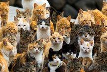 """四国 """"Ao-Shima"""" / wwwww 猫の楽園こと、愛媛県の青島ですが、住民15人に対し猫が200匹以上ってw まぁ、猫も犬も好きなんで許すw しっかし、よく増えたモンですねぇ。発情期とかは、地獄ですなw 国とか県でちゃんと管理してあげて島民と猫が住みやすい環境を守って欲しいですね^_^"""