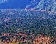 """本州 """"Aoki-Ga-Hara"""" / 綺麗な所なんですけどねぇ・・・。まぁ、あまり車道から外れないようにしといたほうがいいかもですね。富士五湖巡りすると通らざるを得ないのですが、紅葉の時期は素晴らしい色彩に囲まれます。"""