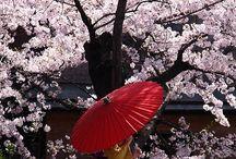 四季彩Japan