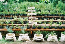 This Is How My Garden Grows / Gardening ideas, potting sheds, garden antiques...