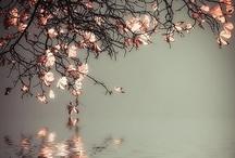 Nature / La nature sous toute sa splendeur / by Julie