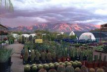 Green Things / Photos of Green Things Nursery in Tucson, Arizona