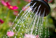 Irrigation & Water Features / What to do about watering your plants in the desert.