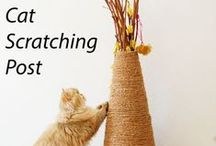 Cat DIYs / DIY projects for your cat and home. DIY scratching posts. DIY cat trees. DIY litter box. DIY cat toys. Catify your home. Catification.