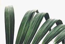 GREENERY / plants