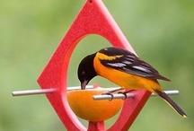 Birds Birds Birds / by Joyce Ketner