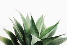 Botany / by Heather DeToma