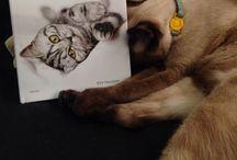 FurKids / 3 little (forever) kittens / by Tufriel