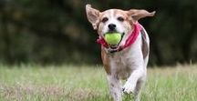 Christmas Toys for Dogs 2016 / Give your furbaby extra love this holiday season. Find here your perfect gift dog bundles, snack, and accessories.
