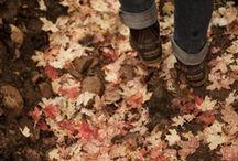 Fall :D / by Jessie Lumpkin