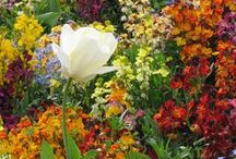 Garden and Plants / I'm a Landscape Designer's Daughter Who Loves Plants and Unique Ideas
