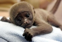 Animals  / Variety of adorable animals that make me smile