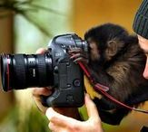 Photography / Photographers let us see the amazing world around us through their lens.