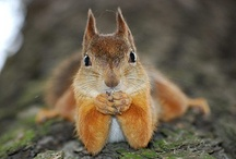 Squirrels / I have a thing for squirrels.