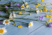 Beautiful flowers / Beautiful flowers from around the world