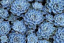 Succelent / Flowers