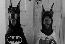 Pets / Animalillos de compañia  / by Ginebra Bombay Zafirou