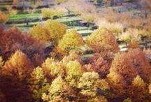 Extremadura / #Spain #CherryBlosom #countryside #Organic #Rivers #Nature #Romanic