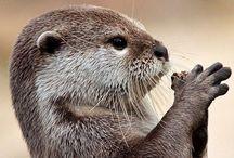 Otters^